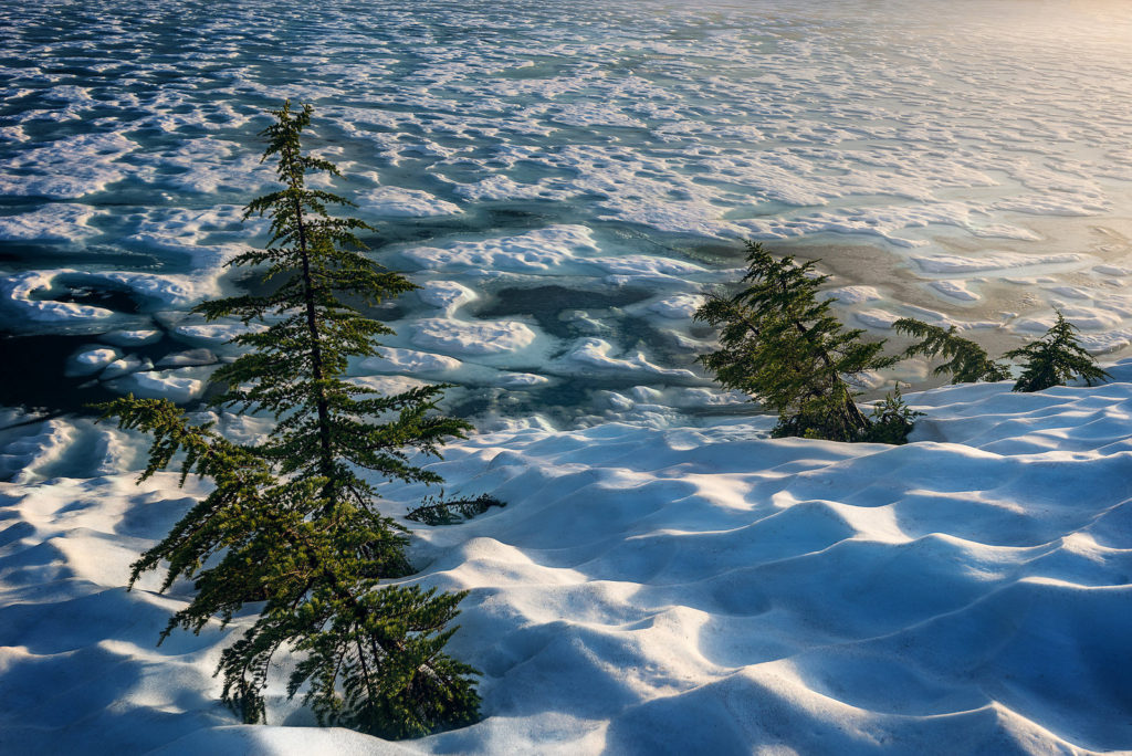Trees in the Melt